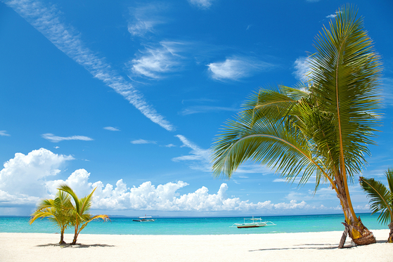 14244413 - two palm trees on a beach in bantayan island, philippines