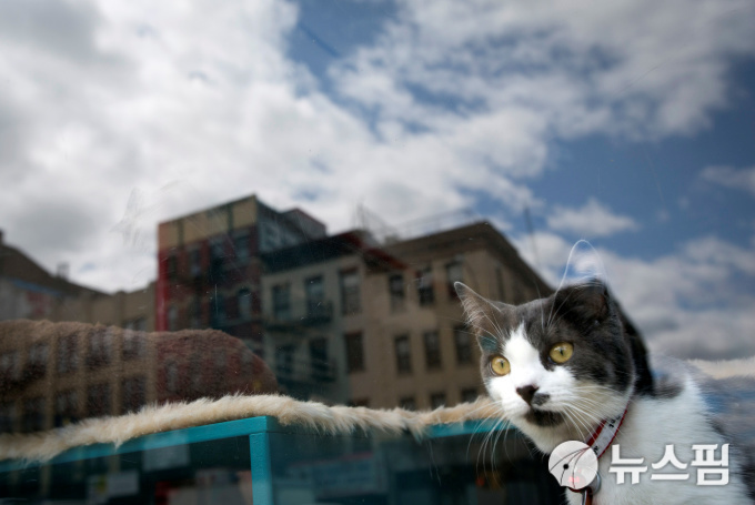 FILE PHOTO: A cat looks out a window at a cat cafe in New York April 23, 2014.    REUTERS/Carlo Allegri/File Photo